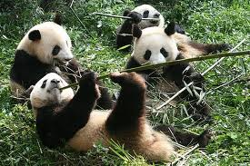 Google Panda update and small businesses